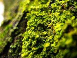 Moss on the tree bark by ArthurGautama