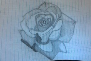 rose take 1 by Brands11