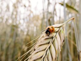 Ladybird by TiSo94