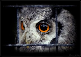 Life Behind Bars by lomoboy