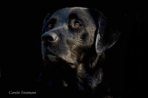 dog in black by Vitadog