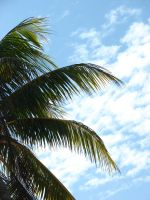 Palm Fronds by a-girl-like-me