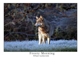 frosty morning by Yair-Leibovich