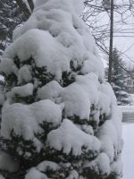 Snow Covered Tree by ikutophantomluver
