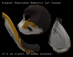 Kinzart Productions Domestic cats by Night-eco