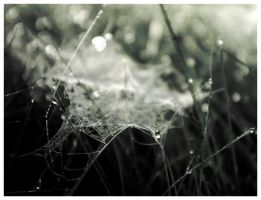 The Spider's Haunt by rose--thorn