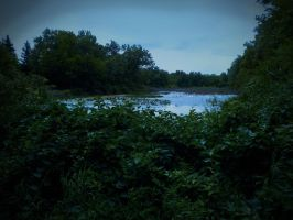 The Breeding Ground by LAPoetry-n-Photo