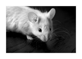 Mouse BW by Hector42