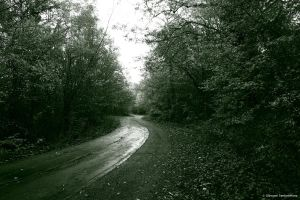 Old road in the woods by GiovanniSantostefano