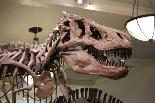 Rexy at the museum! (huge file) by HPfangirl9177
