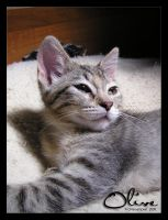 Olive - 07262009-1 by ConnieFaye