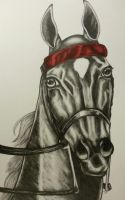 American Saddlebred portrait by Comix-Chick