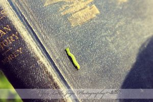 The Book and the Inch Worm by LLJPhotography