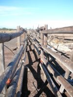 Paddock Corral Thingamabob 2 by Confussed-Stock