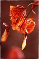 wilted leaves 2 by wildtea