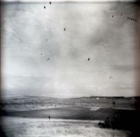 Holga 74 by xxlogre
