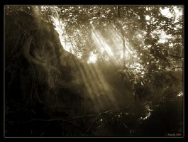 Enchanted Forest by magikfoto