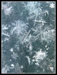 Snowflakes on Glass by Annetteks