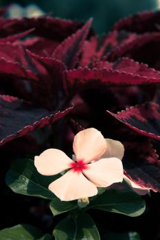 Contrasting flower by daily-telegraph