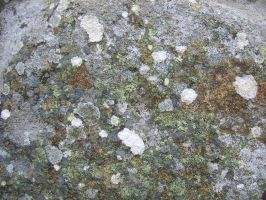 Stone Texture 06 by Siobhan68