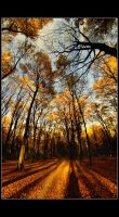 gold dream by Trifoto