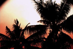 Coconut Silhoute by IVYangelica