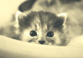 little cat by Ahaaki