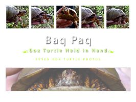 Box Turtle Pack II by Baq-Stock