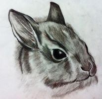 Rabbit by Disney4Shades