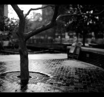 A Gentle Rain Black And White Alternative by tntrekabulator