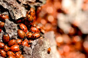 Ladybug Party Close Up by Caitiekabob