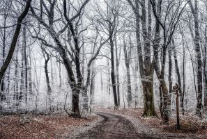 path in the wood by 8moments
