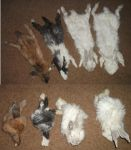 Home Tanned Rabbit Pelts by Killslay-steelclaw