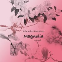 Magnolia by libidules