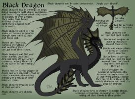 Black Dragon Reference Sheet by chaosinvert