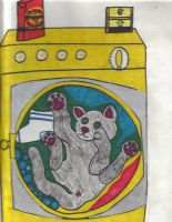 Lori's cat in the washer by Buhla