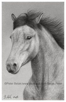 Photorealistic postcard size horse drawing. by petbet1
