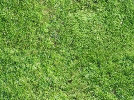grass texture repeating patter by mas