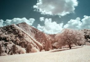 IR day II by joffo1