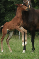 Foal stock 114 by Bundy-Stock