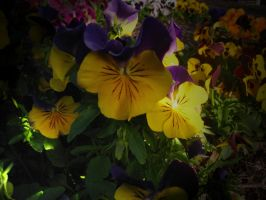 Pretty Colour Flowers by darkened-storm