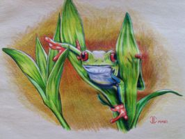 Tree Frog by seph8