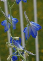 Stock 379 - Blue Flowers by pink-stock