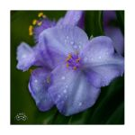 Small flowers by photoman356