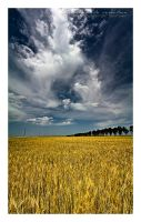 A dream in a wheat field Pano3 by vxside