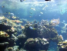 Coral-reef4 by Trisaw1