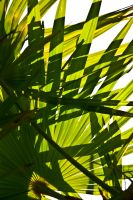 Palm stock by Quinnphotostock
