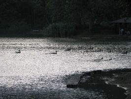 Sunset Pond 1 by Polly-Stock