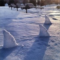 Snow shark by monkeyrum