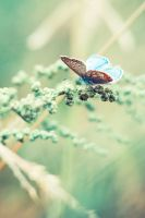 butterfly by annasizova